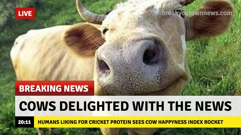 breaking news happy cows thanks to cricket protein trend