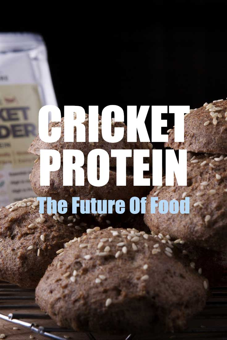 cricket protein the future of food